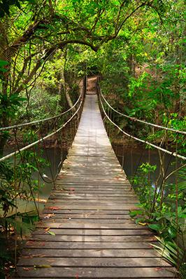 Khao Yai National Park,Thailand, Hängebrücke im Dschungel