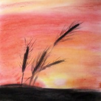 Pastellmalerei: »Weizenähren«, Oktober 2010 | © mh